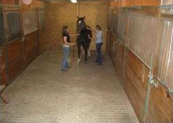 Equestrian Camera System